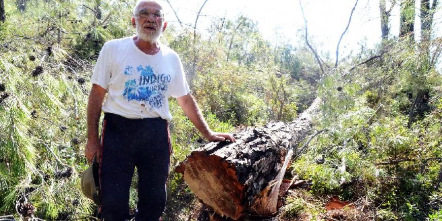 Akbelen'de çam ormanı kesimi başladı, köylü sert tepki gösterdi