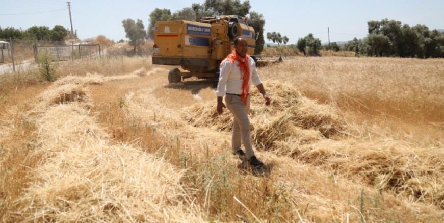 Ata tohumu buğday hasadı yapıldı