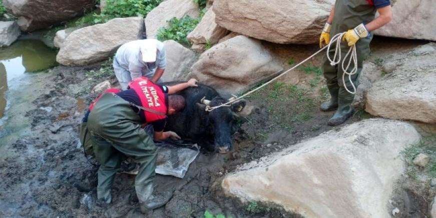 Bataklığı düşen inek itfaiye ekiplerince kurtarıldı
