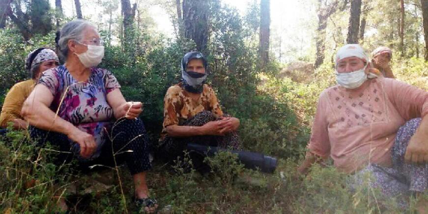 Bayramı ormanda nöbet tutarak geçiriyorlar