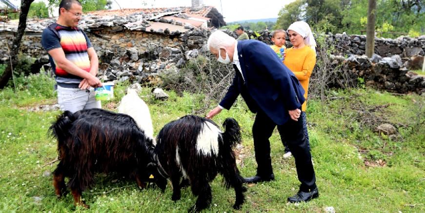 Belediye 100 aileye kıl keçisi desteğinde bulunacak