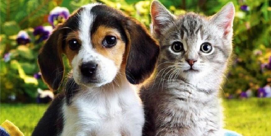 Belediye meclisi  evcil hayvan satışını yasaklandı