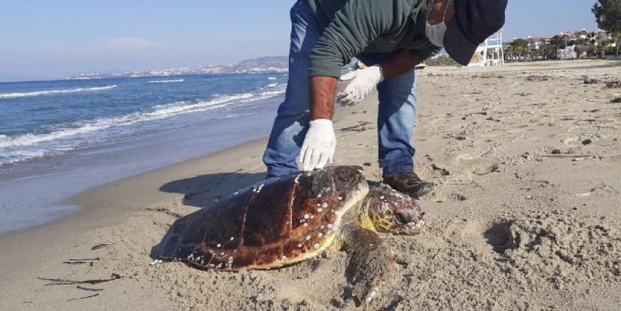 Deniz kaplumbağalarını acımadan öldürüyorlar