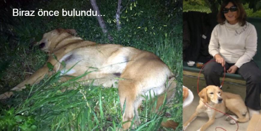 Bodrum'da köpek zehirlenmeleri durmuyor, ünlü sanatçının köpeğini öldürdüler