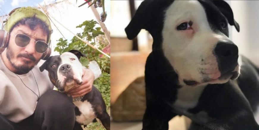 Bodrum'da Mercedesli köpek hırsızları isyan ettirdi