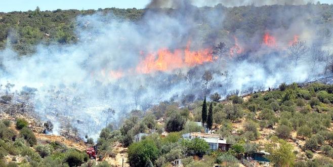 Bodrum'u kalbinden yaktılar, ormanlar alev alev