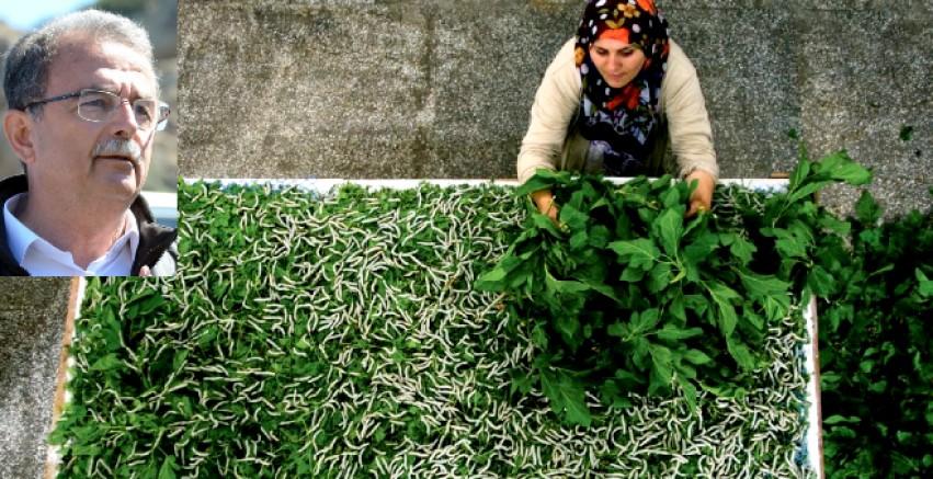 """CHP Li Girgin """"İpek böceği yetiştiricileri zorda"""""""