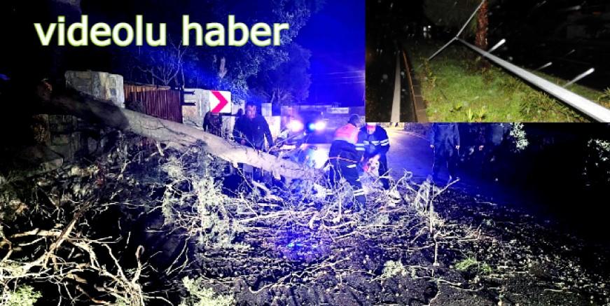 Fırtına Bodrum'u vurdu asırlık ağaçlar devrildi, yollar kapandı