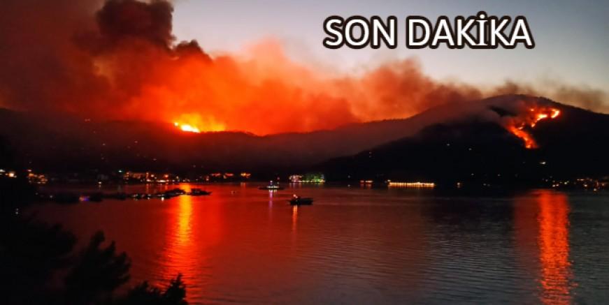 Güvercinlik' teki orman yangınında 80 hektar halep çamı kül oldu