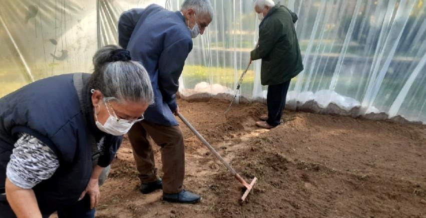 Huzurevi'nde kurulan serada kendi ürünlerini yetiştirecekler