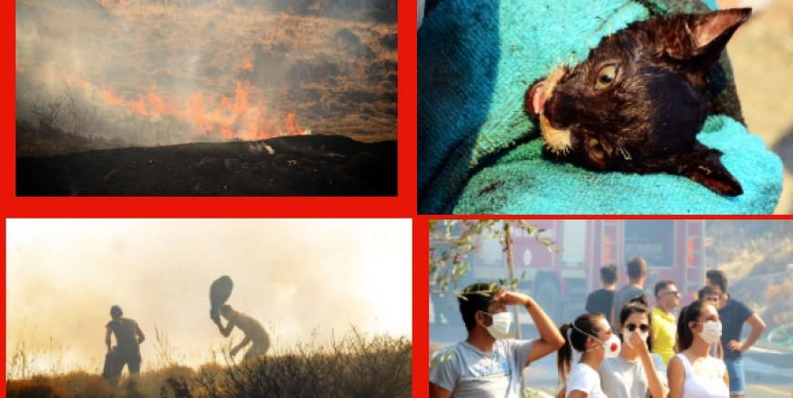 Küdür yarımadasında yangın kabusu, alevlerin içindeki kediyi böyle kurtardılar