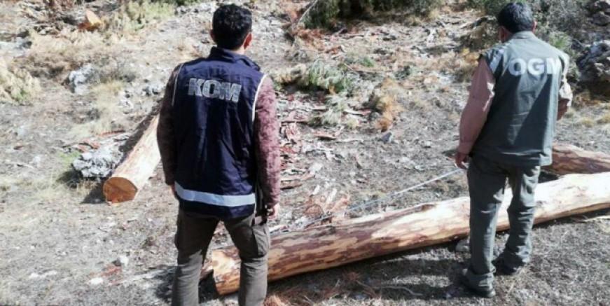 Muğla'da 2 milyon liralık orman vurgunu operasyonu, 9 gözaltı