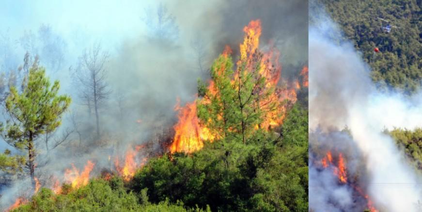 Muğla'da Kelebekler Vadisi' nde orman yangını