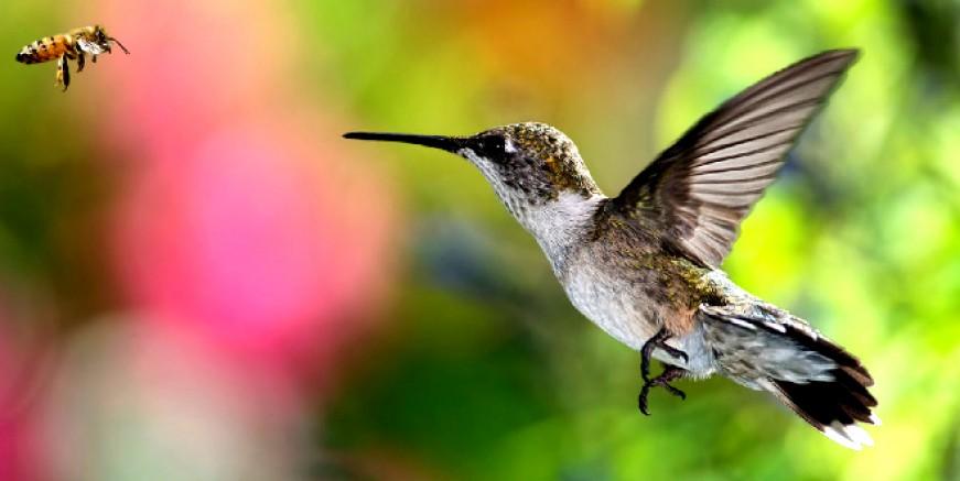 Nesli tükenen kuşların avlanmasına oy birliğiyle karar verildi