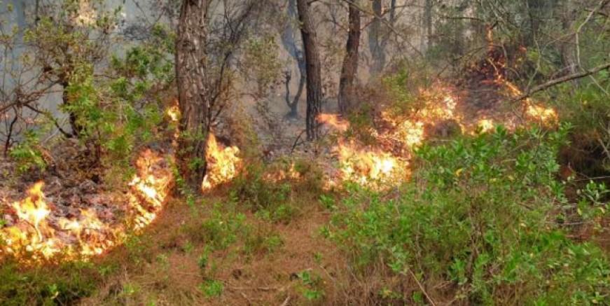 Ormanlık alanda bulunan yangın hızlı müdahale ile söndürüldü