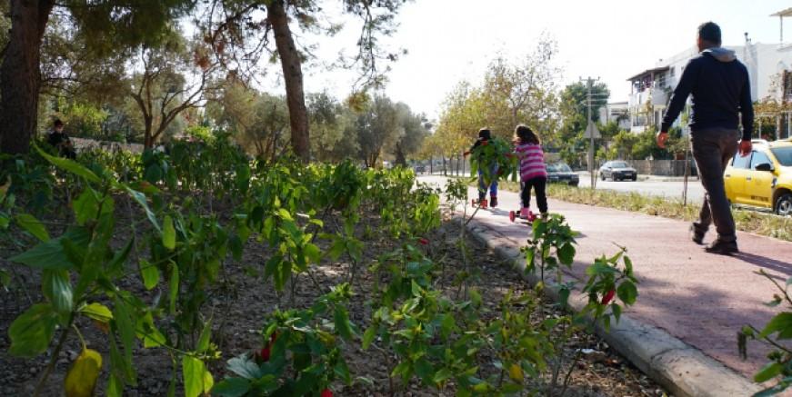 Konacık'taki Pedasa Leleg Parkı hizmete açıldı