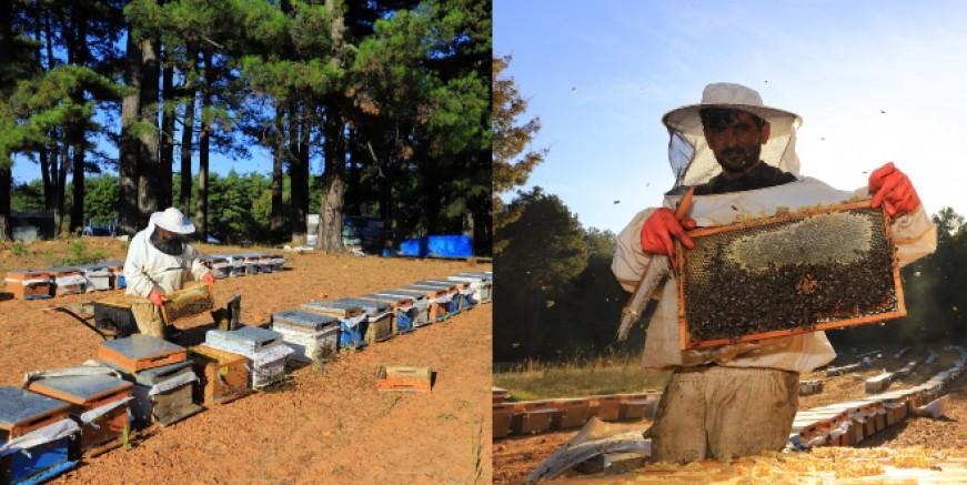 'Sürdürülebilir Arıcılık, Katma Değerli ve Verimli Üretim' projesi hayata geçirildi