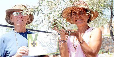 27 yıllık turizmci, zeytinci oldu, Altın ödülünü kaptı