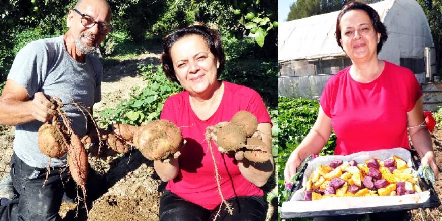 Turizmciydiler pandemide patatesçi oldular, tatlı patatesi ürettiler