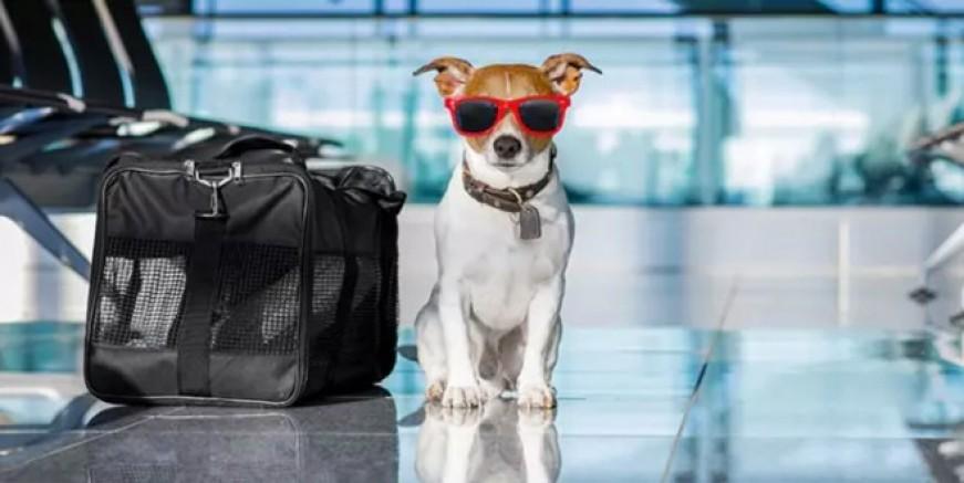Türkiye'den ABD'ye köpek girişi yasaklandı