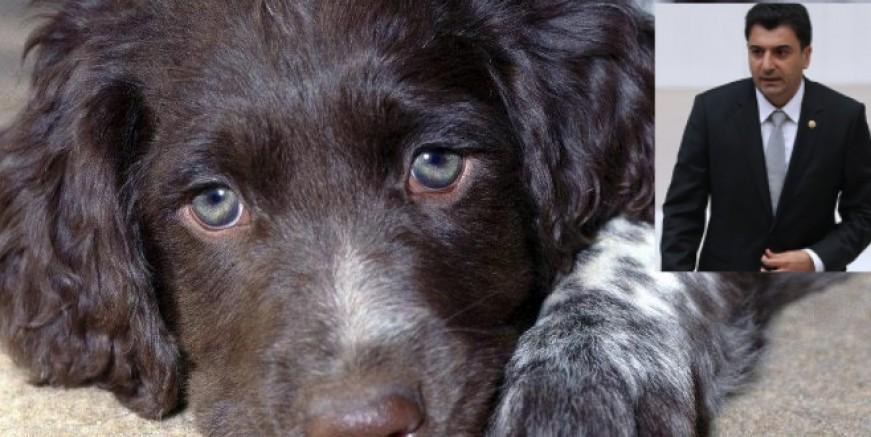 Yeni kanun teklifi: Hayvanlara işkence edenlere ceza verilsin (2-5 yıl)